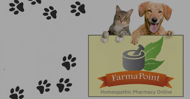 Homeopathic Remedies for Pets